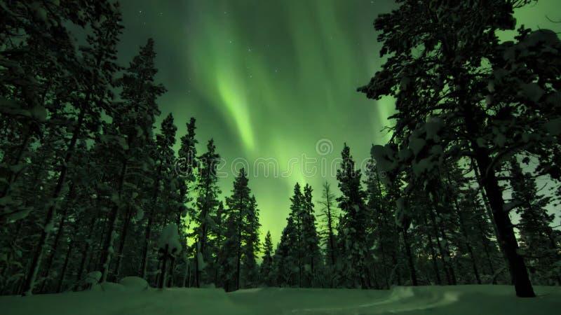 Aurora borealis über Bäumen im finnischen Wald Saariselka lizenzfreie stockfotografie