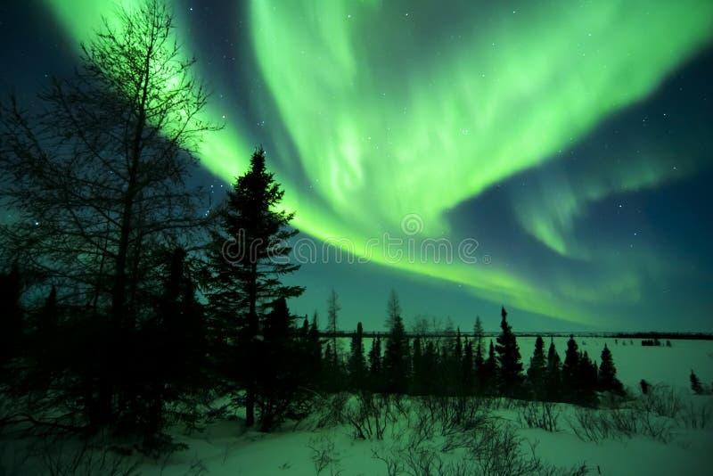 Aurora Borealis above Tundra. Nightsky lit up with aurora borealis, northern lights, wapusk national park, Manitoba, Canada royalty free stock photos