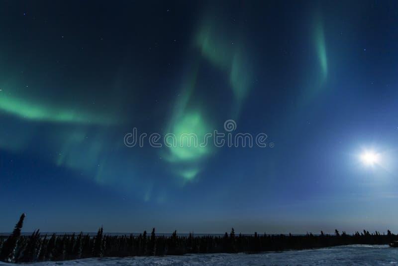 Aurora borealis au-dessus de toundra arctique photos libres de droits