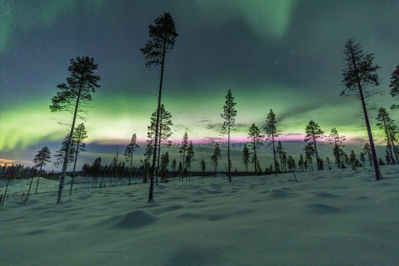 Aurora borealis (aurora boreal) en bosque de Finlandia, Laponia imágenes de archivo libres de regalías