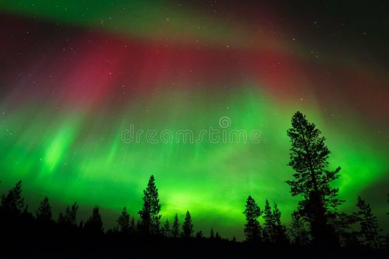 Aurora Borealis, aurora boreal, sobre bosque boreal foto de archivo libre de regalías