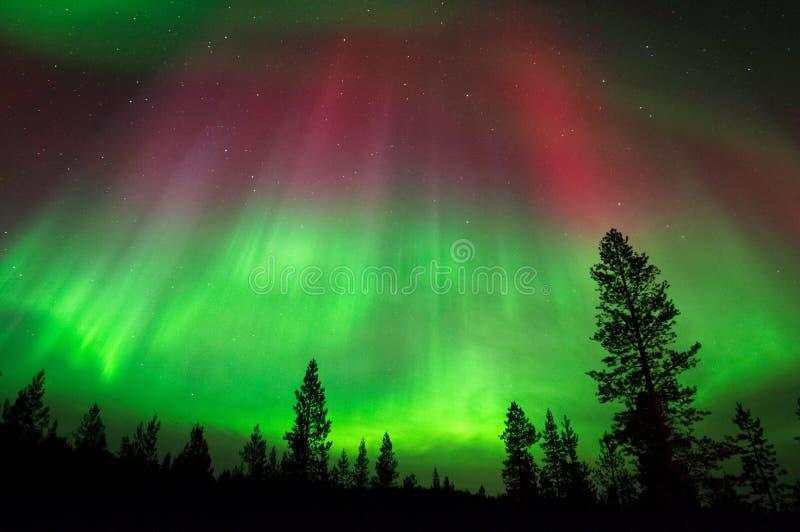 Aurora Borealis, aurora boreale, sopra la foresta boreale fotografia stock
