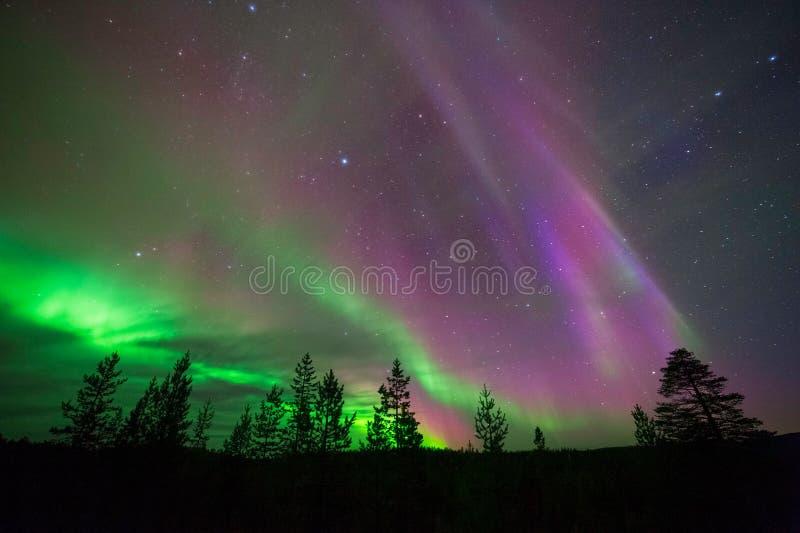 Aurora Borealis, aurora boreale, sopra la foresta boreale fotografia stock libera da diritti