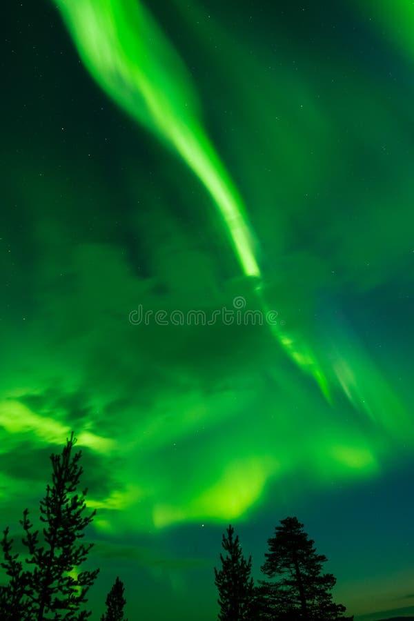 Aurora borealis, aurora boreale, sopra le cime d'albero immagini stock libere da diritti