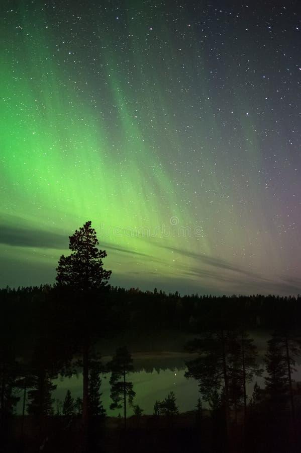 Aurora borealis boven bosvijver in noordelijke taiga stock foto