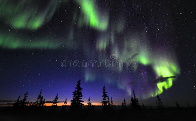 Aurora Borealis boven Toendra en donkere hemel stock foto's