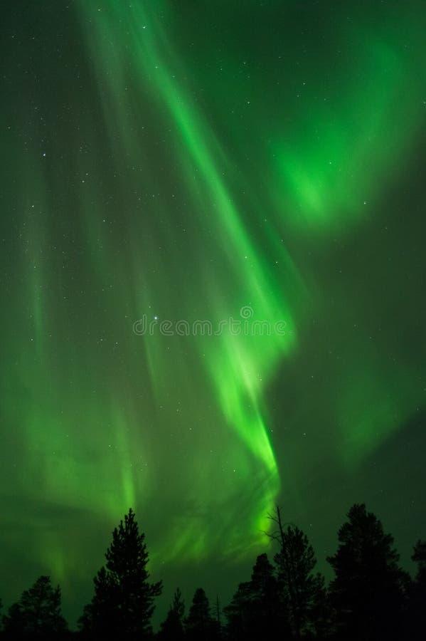 Aurora borealis boven treetops royalty-vrije stock afbeeldingen