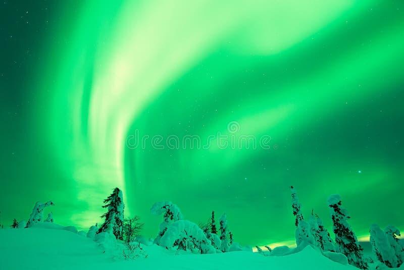 Aurora Borealis con los árboles nevosos imagenes de archivo