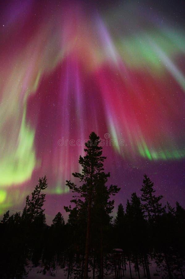 Aurora Borealis corona above forest trees. Aurora Borealis, Northern Lights, corona above forest trees in Finnish Lapland royalty free stock photo