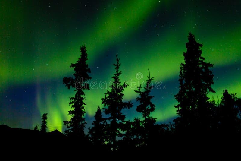 Aurora borealis dell'aurora boreale dell'abete rosso di taiga del Yukon immagini stock