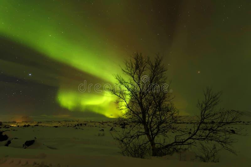 Aurora Borealis e un piccolo albero fotografia stock libera da diritti