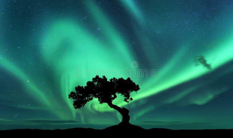 Aurora borealis en silhouet van een boom op de heuvel royalty-vrije stock afbeelding