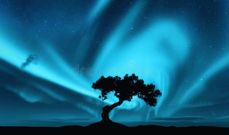 Aurora borealis et silhouette d'un arbre sur la colline photographie stock