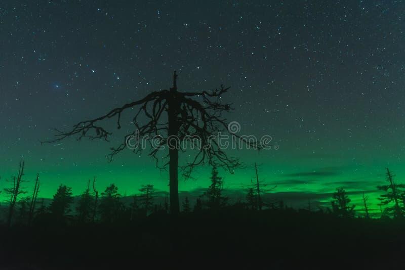 Aurora borealis, Karelia, Russia royalty free stock photos