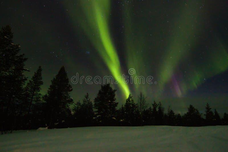 Aurora borealis na nocnym niebie nad zima las obraz royalty free