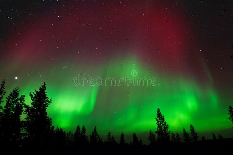 Aurora Borealis, Noordelijke Lichten, boven boreaal bos royalty-vrije stock foto's