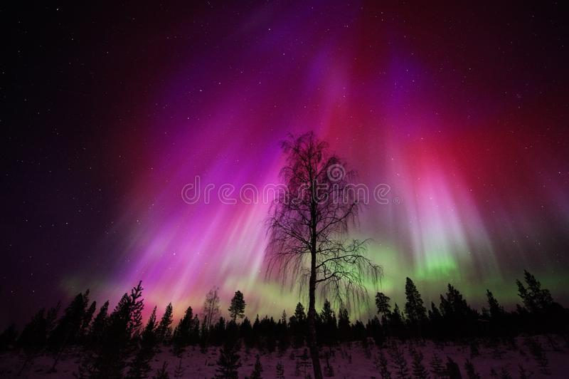 Aurora Borealis, Noordelijke lichten, boven de winterbos stock fotografie