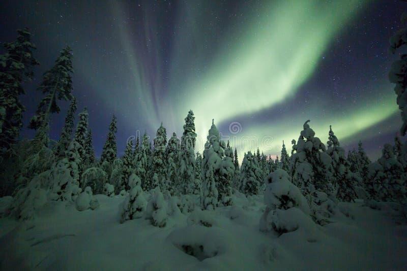 Aurora borealis (Noordelijke Lichten) het bos in van Finland, Lapland stock foto's
