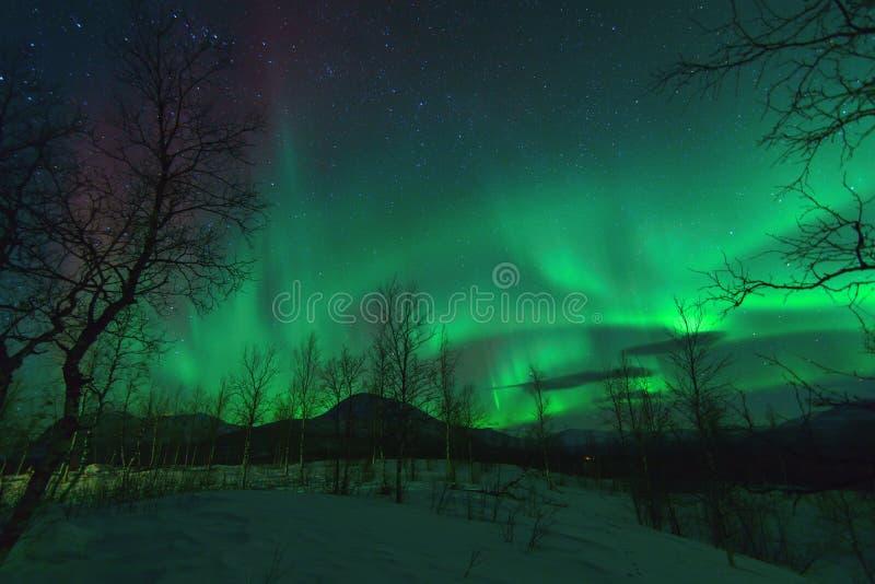 Aurora Borealis nordliga ljus arkivfoto