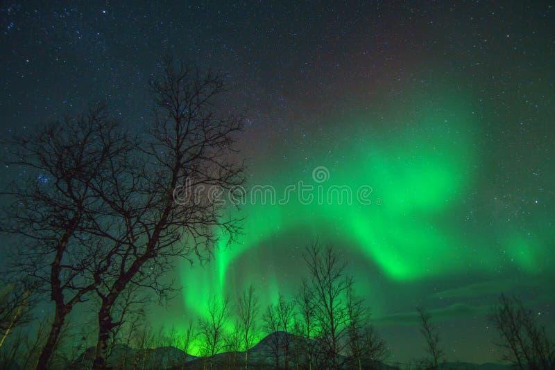 Aurora Borealis or Northen lights phenomenon. Aurora Borealis or Northen lights phenomenon in Nikkaluokta, Sweden stock photography