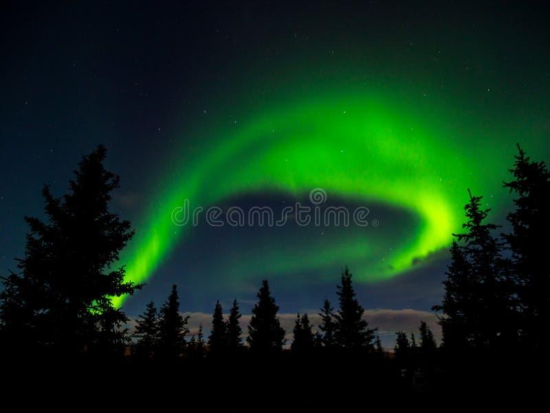 Aurora Borealis Norther Lights au-dessus de forêt photo libre de droits