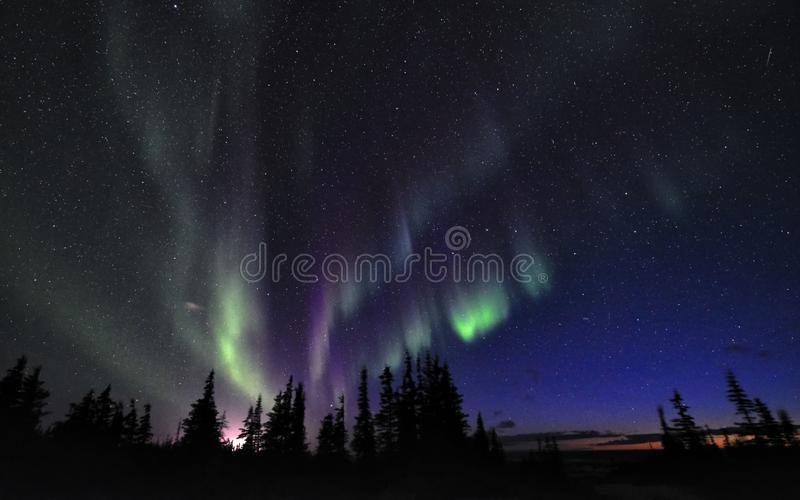 Aurora Borealis ovanför tundra och mörk himmel royaltyfria foton