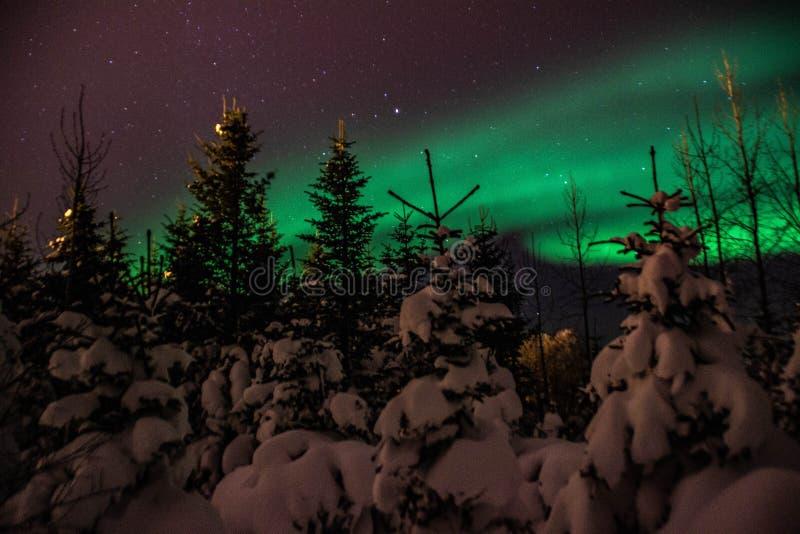 Aurora Borealis/Północni światła nad Islandzki śnieg zakrywał las fotografia stock