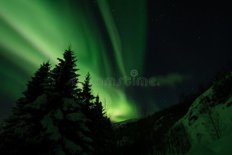 Aurora Borealis sobre Bakkejord, cerca Tromso Noruega de marzo de 2019 con pinetrees y montañas en el primero plano imagen de archivo libre de regalías