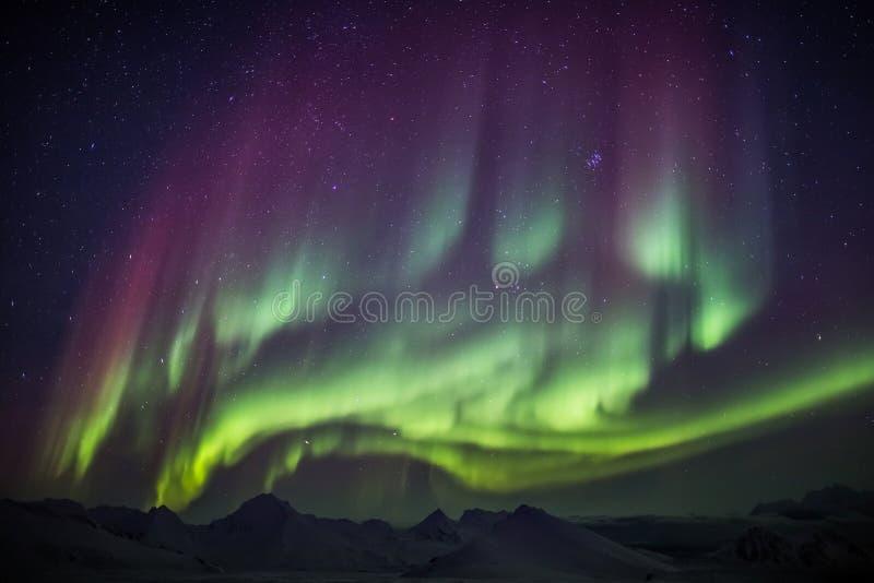 Aurora Borealis straordinaria sul cielo artico - Spitsbergen, le Svalbard fotografia stock libera da diritti