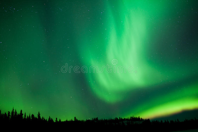 Aurora borealis substorm swirls over boreal forest. Intense green northern lights, Aurora borealis, on night sky with stars over boreal forest taiga, Yukon stock photos