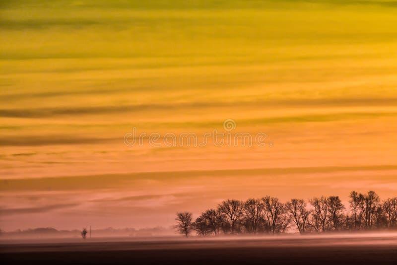 Aurora Dourada com Nevoeiro e Árvores Mortas foto de stock royalty free