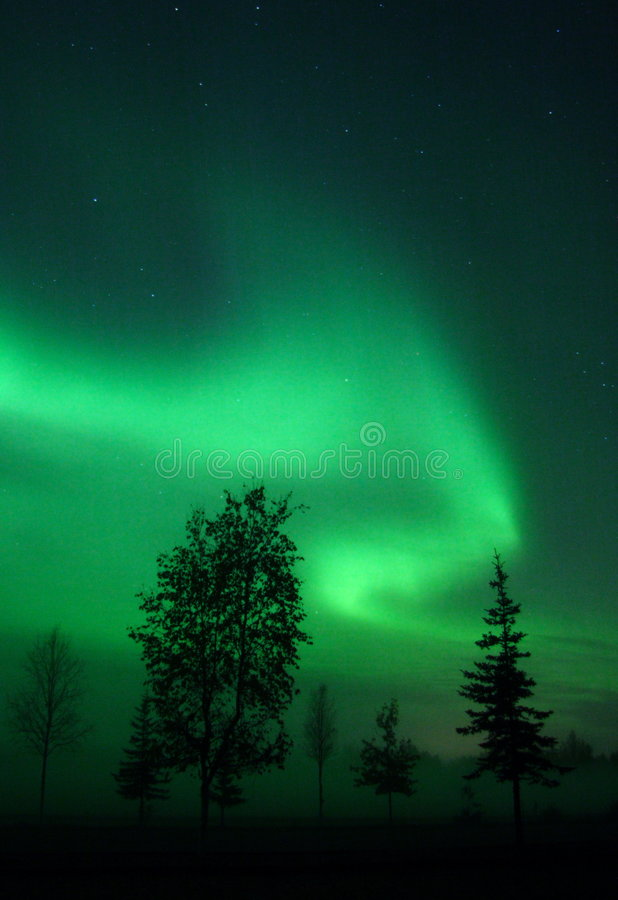 Download Aurora over swirl trees στοκ εικόνα. εικόνα από φαινόμενο - 396727