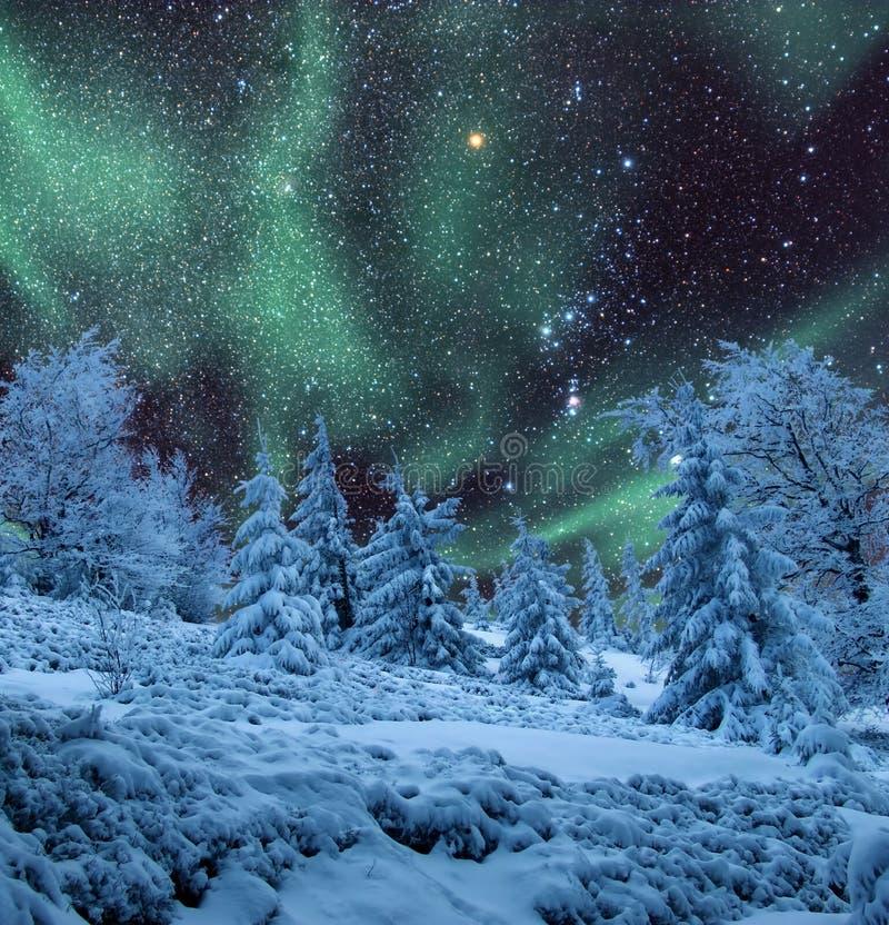 Aurora sobre el bosque congelado imagen de archivo libre de regalías