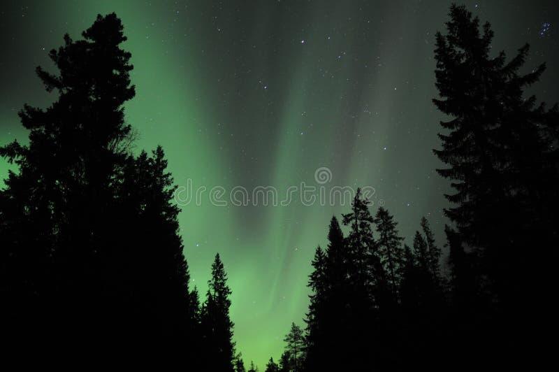 Aurora sobre el forestNorway fotografía de archivo libre de regalías