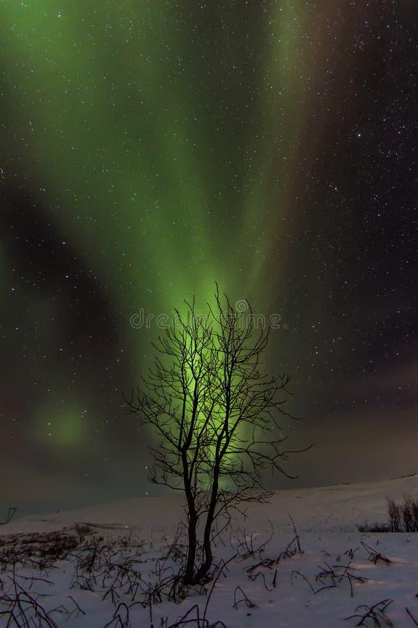 Aurora Tree stock photos