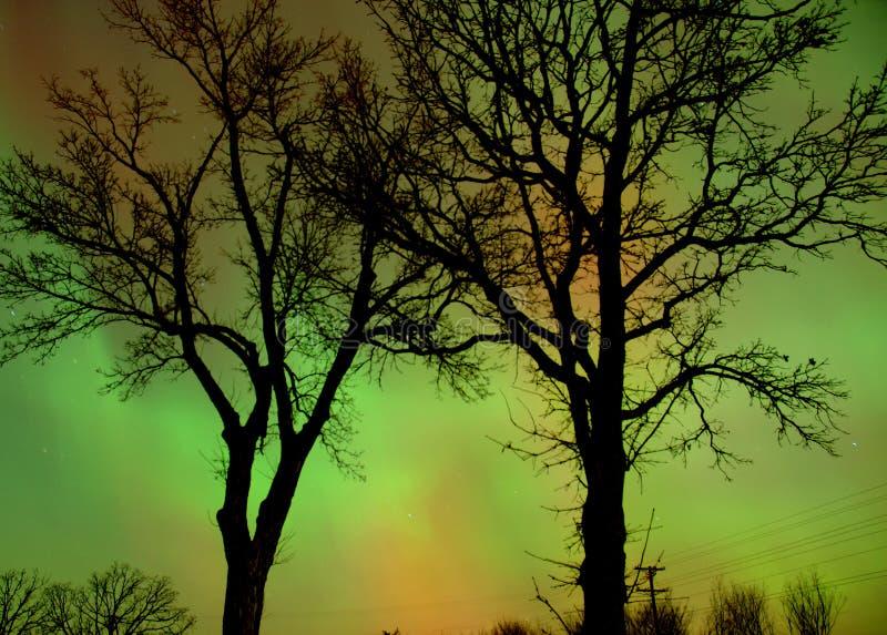 Aurora Through Trees Stock Image