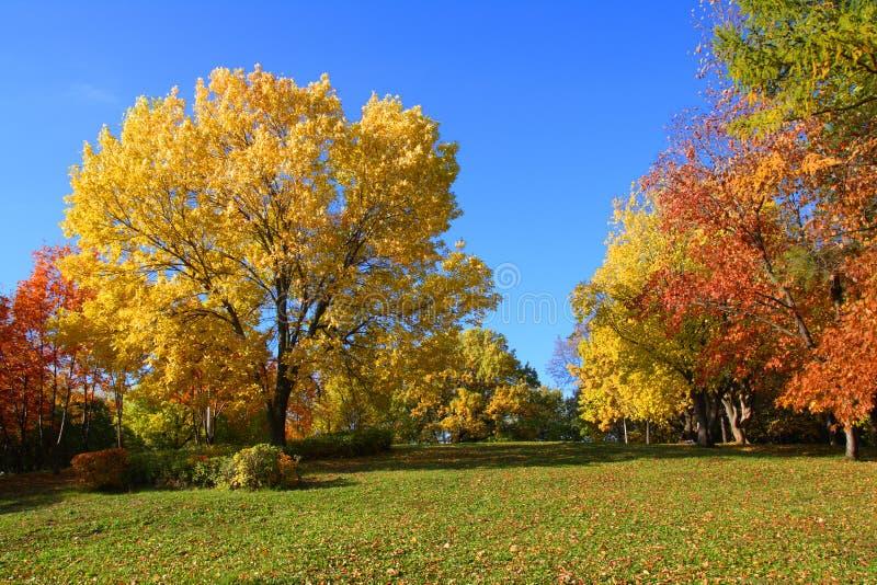aurumn krajobrazu parka drzewa zdjęcie royalty free