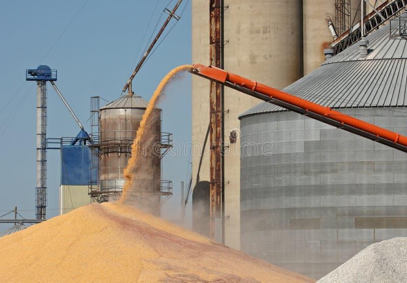 Aus dem Programm nehmen von Mais lizenzfreies stockfoto