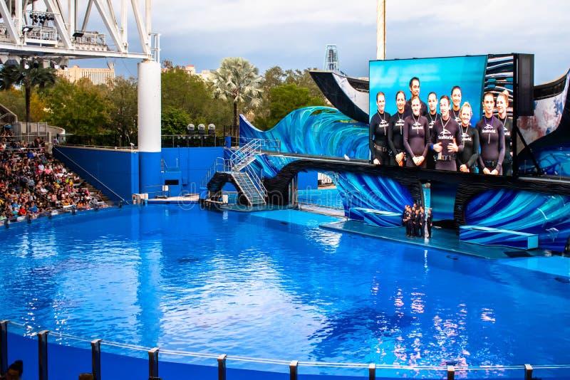 Ausbilder in Orca Encounter Show auf der Seaworld 284 lizenzfreies stockbild