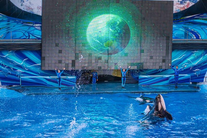 Ausbilder und Wale in einer Ozeanshow auf der Seaworld 21 lizenzfreies stockbild