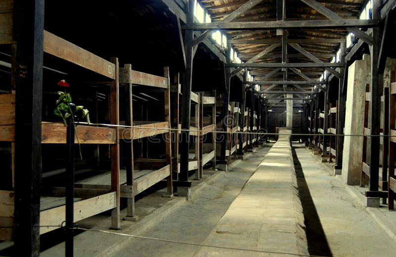 Auschwitz, Poland: Prisoner Barracks. Inmates at the Auschwitz-Birkenau, Poland concentration camp slept in rows of triple-tiered and numbered wooden bunk beds stock photos