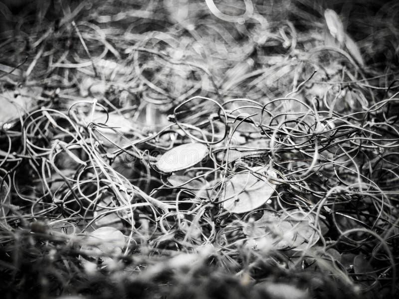 AUSCHWITZ, POLOGNE - 2 SEPTEMBRE 2017 Verres apportés par des prisonniers d'Auschwitz au camp de concentration, Auschwitz, Pologn image libre de droits