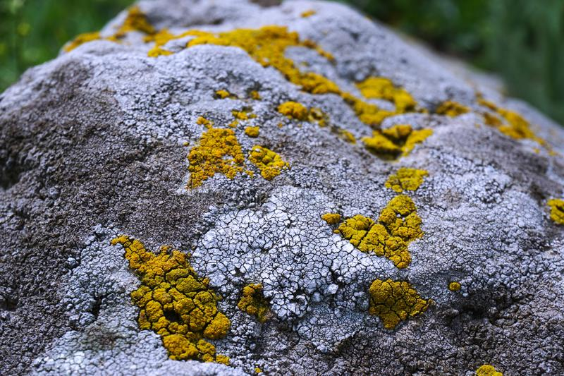 Ausführliche Ansicht des verwitterten Steins bedeckt mit den gelben und weißen Flechten stockbilder