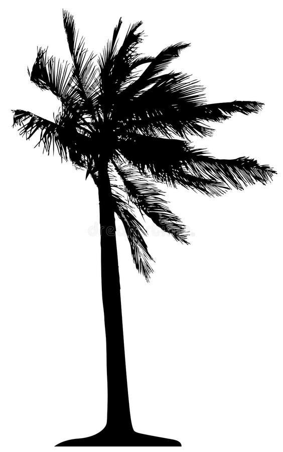 Ausführliche Palme stock abbildung