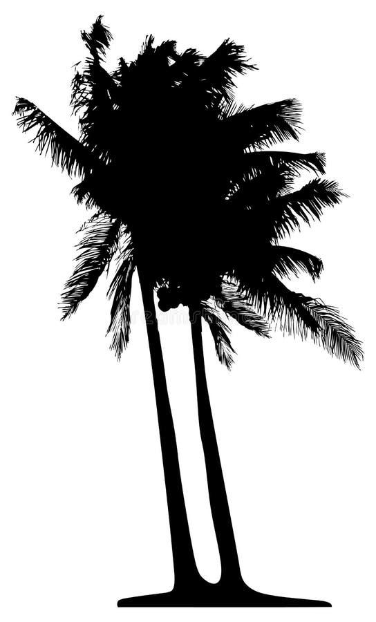 Ausführliche Palme lizenzfreie abbildung