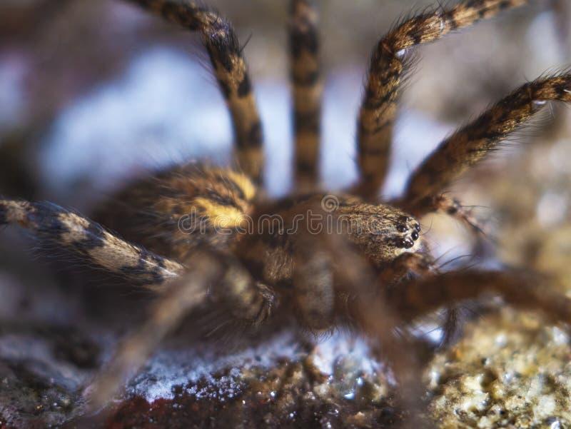 Ausführliche Spinne mustert Makro stockfotos