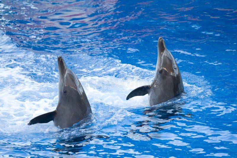 Ausführung der Delphine lizenzfreie stockbilder