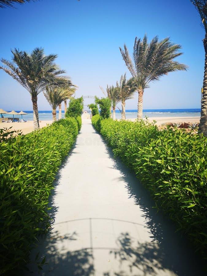 Ausflug-Sommer ?gypten lizenzfreies stockfoto