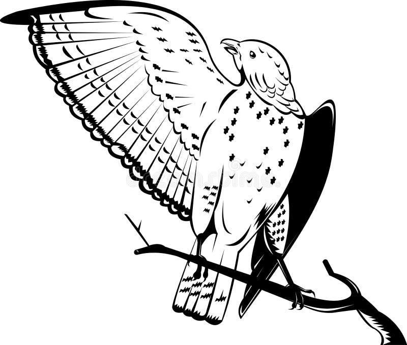 Ausgedehnt-winged Falke lizenzfreie abbildung
