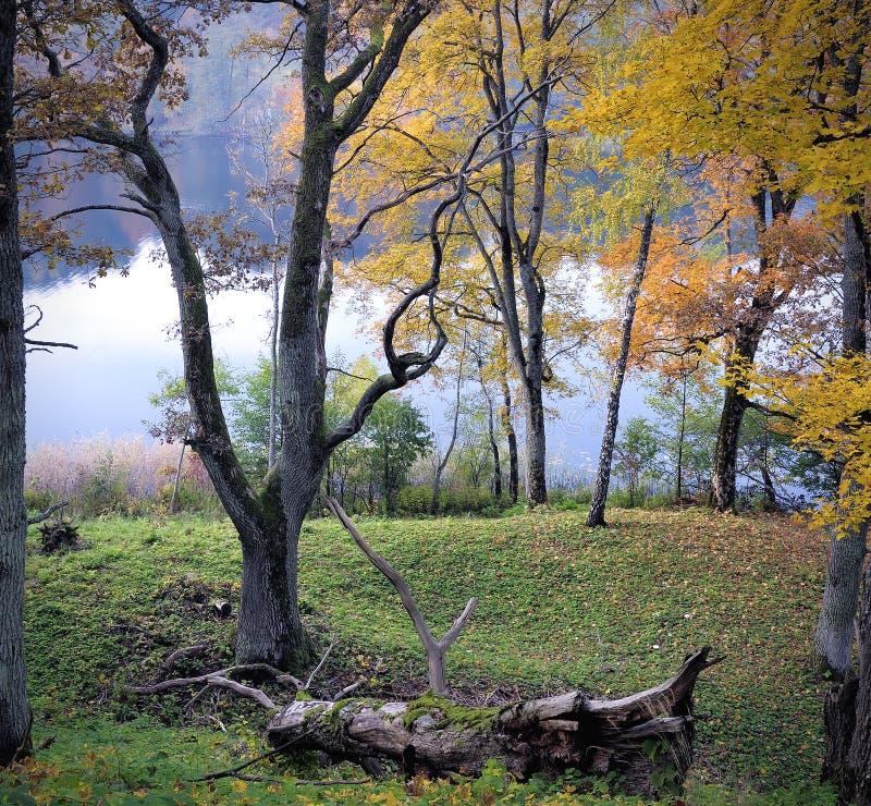 Ausgereifter Herbst lizenzfreie stockfotografie